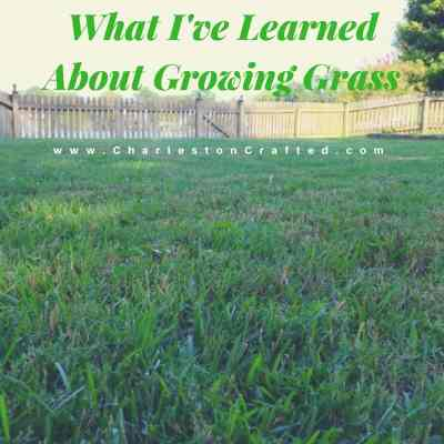 What I've learned about growing grass