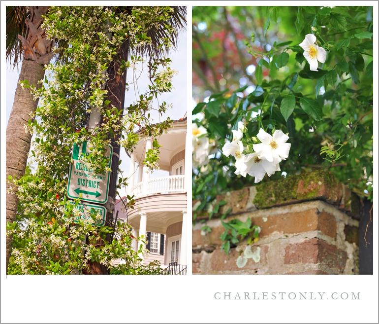 Spring in Charleston, S.C.
