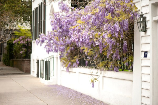 10 Reasons To Visit Charleston This Spring