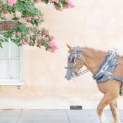 12 Photos That Will Inspire You to Take a Summer Stroll in Charleston
