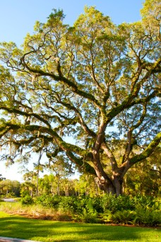 """THE JOURNEY TO KIAWAH ISLAND unfolds beneath a canopy of moss-laden oak trees, past a private airport tucked amid fields of wildflowers, farmland, and roadside vegetable stands. Allow yourself to transition to a carefree """"island time"""" mentality over the course of the 30-minute drive. After all, Coastal Living magazine recently named Kiawah the Happiest Seaside Town in America."""