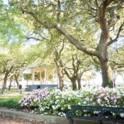 Where to Park It & Picnic in Charleston