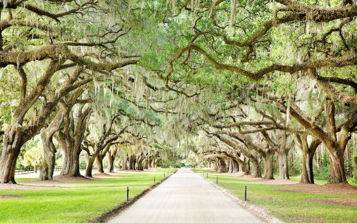 10 Reasons Boone Hall Should Be on Your Charleston Bucket List