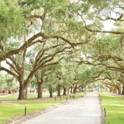 Your Guide to Charleston's Historic Plantations