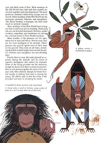Golden Book of Biology | Primate | Charley Harper Prints | For Sale