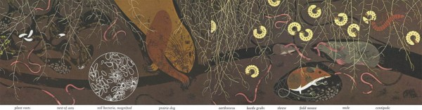 Golden Book of Biology | Prarie | Charley Harper Prints | For Sale
