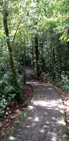 Forest Trail in Selvatura