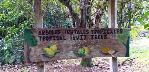 Fruit Trees Orchard