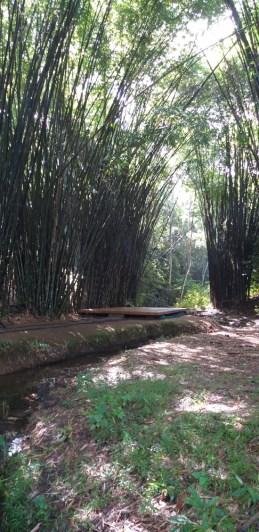Second Yoga Platform by Stream & Bamboo