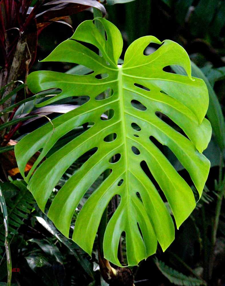 Leaves N' Seeds - Retired in Costa Rica