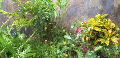 New Yellow Croton Shrub and opened up the Maraca Plant