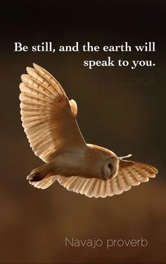 20188e4ede74ae7811581e76b3d51893--be-still-bird-wings
