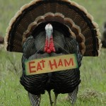 As turkey hunters are all to aware- Turkeys do not share our dinner plans.