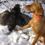 Wisconsin winter turkey offers an additional challenge.