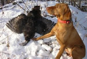 Wisconsin Wild Turkey Slam