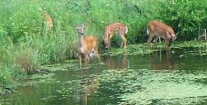 Wisconsin 2014 Deer Hunt Is All Different