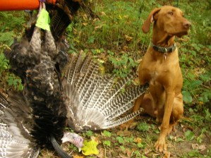 Wisconsin 2017 Fall Turkey Drawing Complete; Estimate of leftover permits Updated with final stats