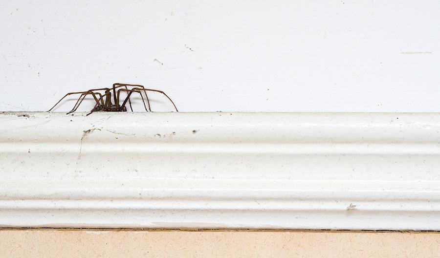 Hoe ik op een uur tijd van mijn jarenlange spinnenfobie verlost geraakte