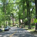 tree lined street in dilworth charlotte nc