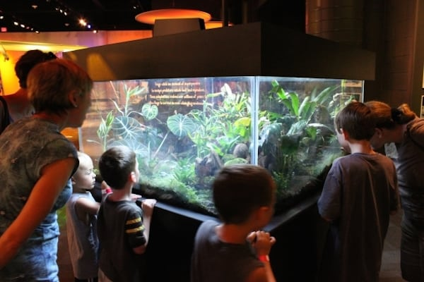 discovery place frogs