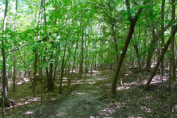 Lake Norman State Park Trail