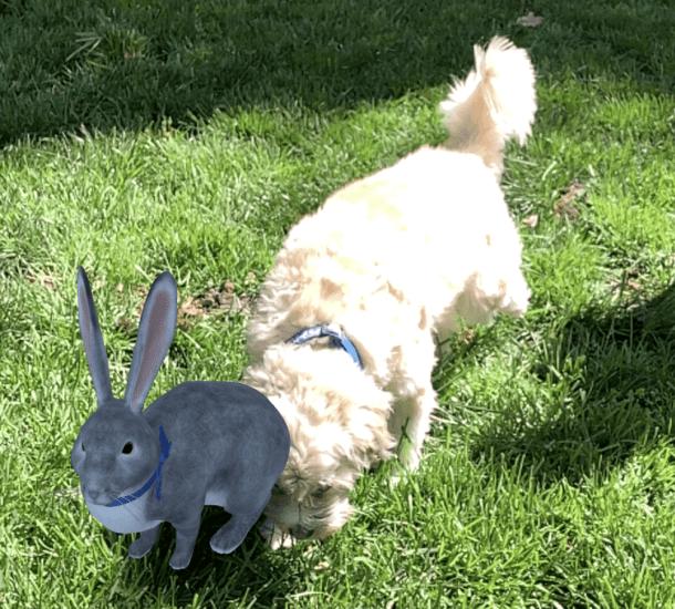 dog sniffing google 3D easter bunny