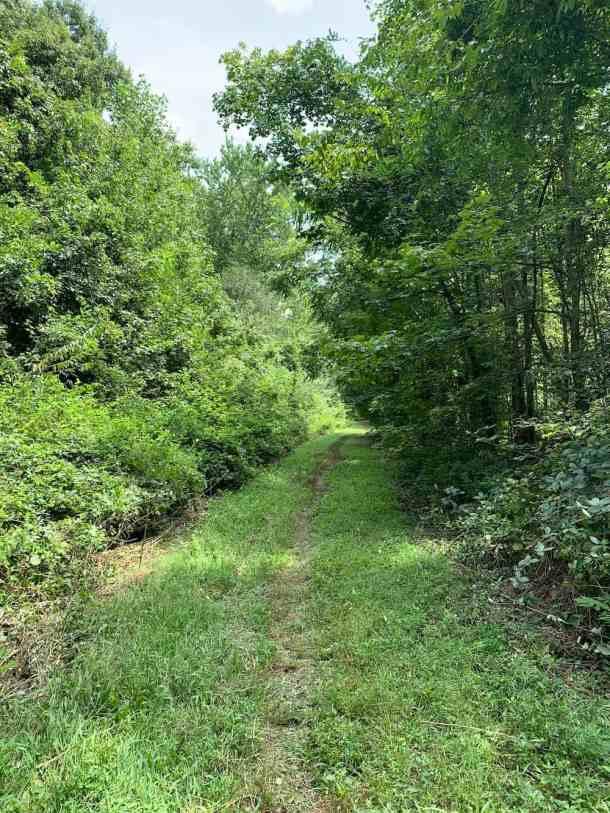 Ribbon Walk Nature Preserve grassy path