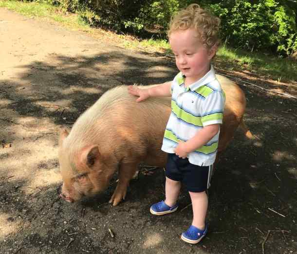 young boy and pig at farm near charlotte, nc