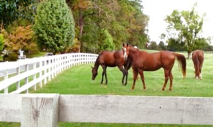 Keswick Horses