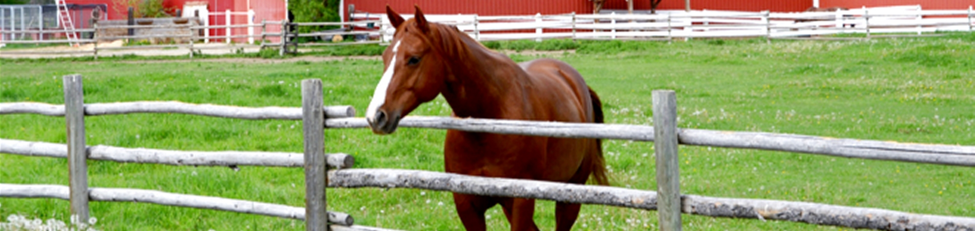 Horsing Around In Va Charlottesville Horse Farms How To Build A Barn Hometips The Area Is Rich Activities For Enthusiast You Could Say That What We Do Best