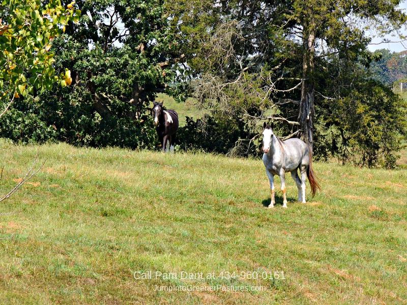 Virginia Equestrian Estates for Sale