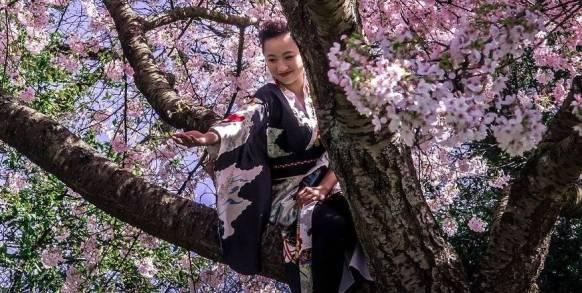 Incontri con la cultura giapponese