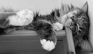 Filippo schläft - © Liisa