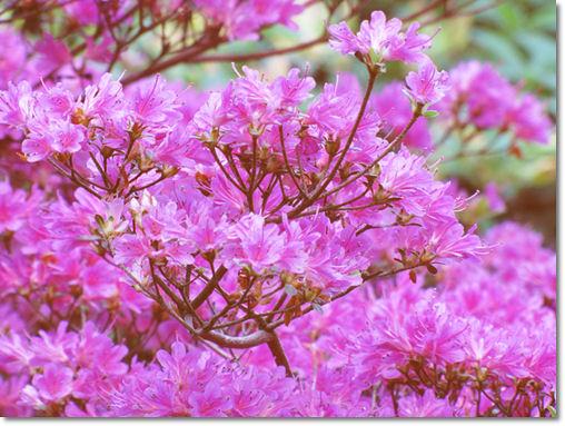 Rhododendronpark Graal-Müritz - © Liisa