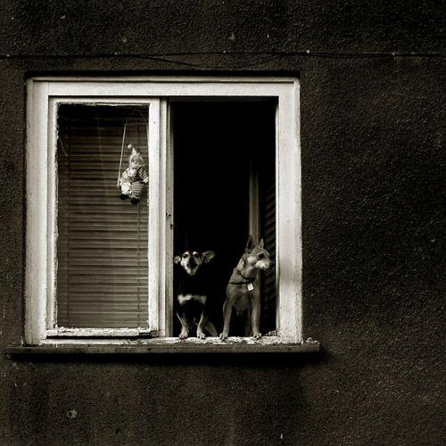 © Marcin Górski