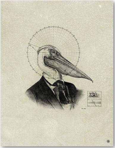 Pelican - © Mark Weaver