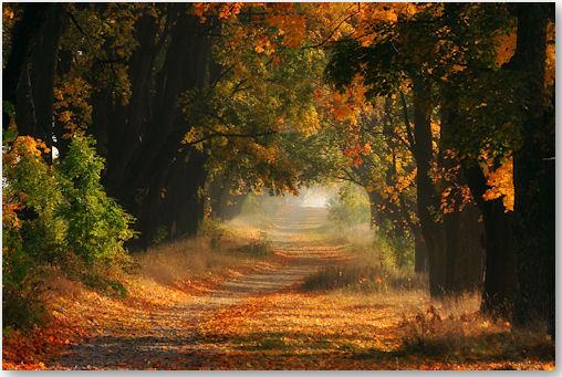 Autumn - © fproject - Przemyslaw Kruk
