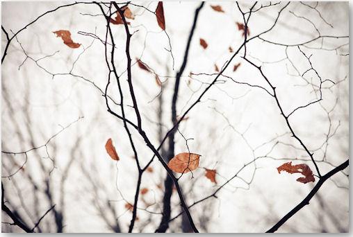 december leafs - © Marcin Iskra