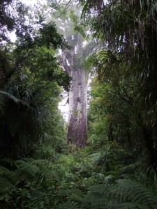 To have that much breathing space is impressive in NZ bush.