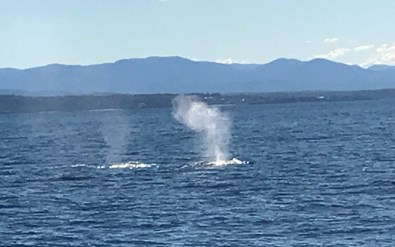 whale watching narooma