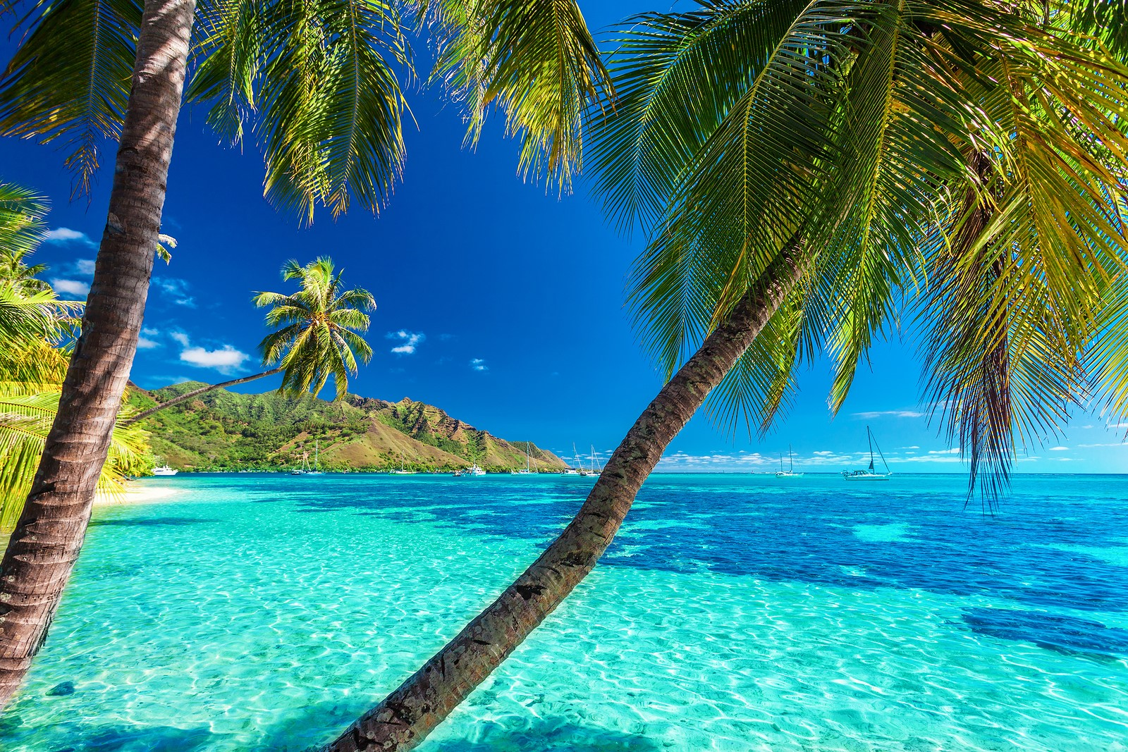 Caribbean Luxury Dominica Yacht Charter The Complete