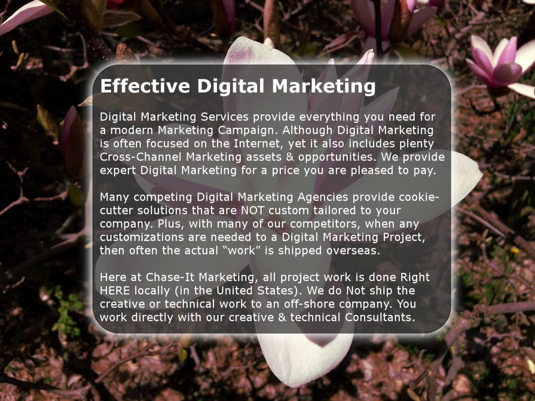 Digital Marketing Services by Chase-It Marketing - Magnolia Tree Zoo Rd Rochester, NY - Copyright, © 2019 Colin Chase