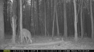 2013_REVIEWSAMPLE1_MOULTRIE_M-990_0016