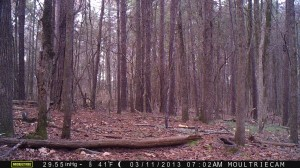 2013_REVIEWSAMPLE2_MOULTRIE_M-990_0004