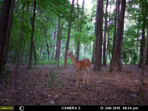 2015_REVIEWSAMPLE_MOULTRIE_A-7i_0041