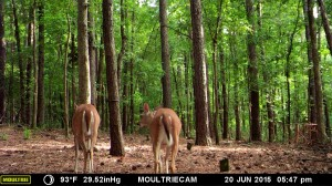 2015_REVIEWSAMPLE_MOULTRIE_M-990i-Gen2_0020