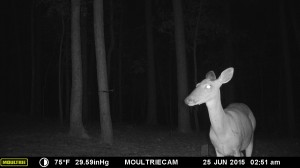 2015_REVIEWSAMPLE_MOULTRIE_M-990i-Gen2_0382