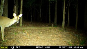 2014_REVIEWSAMPLE_MOULTRIE_M-880C_0039