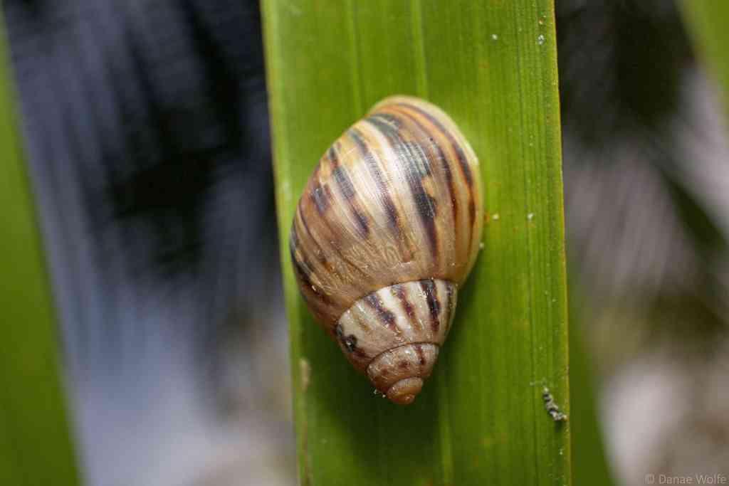 Close up of snail on leaf