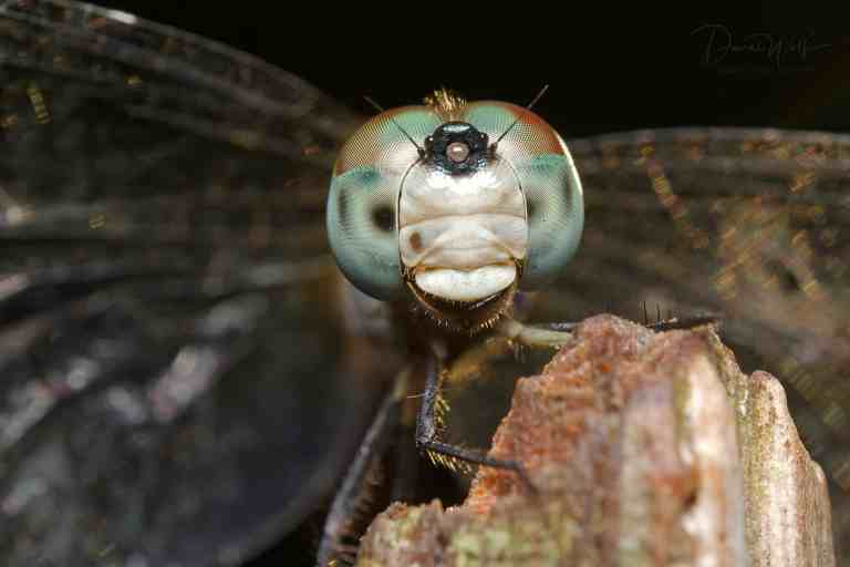 portrait of dragonfly on branch